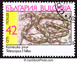 Canceled Bulgarian Postage Stamp Coiled European Cat Snake,...