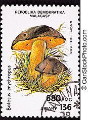 Dotted Stem Bolete, Boletus Erythropus. Recently suggested...