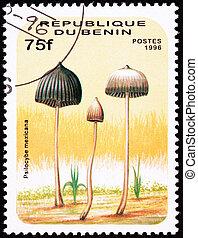 Teonanacatl psychedelic mushroom, Psilocybe mexicana. Looks...