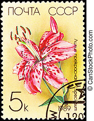 Canceled Soviet Russia Postage Stamp Spotted Pink Lily Lilium Sp
