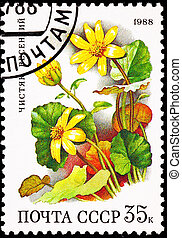 Lesser Celandine, Ranunculus ficaria.  Also known as Pilewort or Scurvywort as the leaves are high in vitamin C.