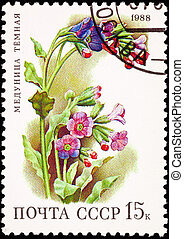 Canceled Soviet Russia Postage Stamp Flower Lungwort Plant...