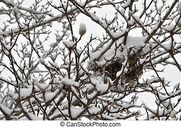 Snowstorm Trees and birds nest