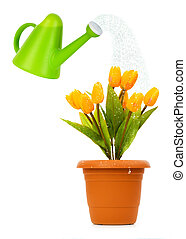 Watering can and pot of tulips