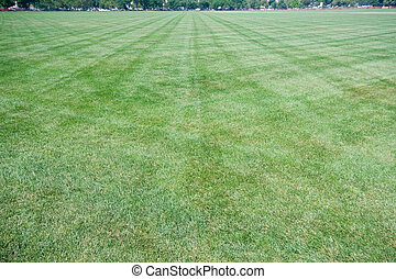 Wide Angle Lawn With Criss-Cross Mowing Marks - Grassy lawn...