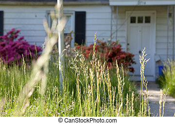 Long Grass Outside Abandoned Cape Cod Single Family Home -...