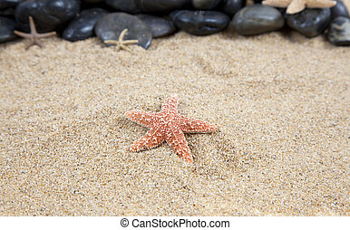 Nice Star fish on the sandy beach taken closeup