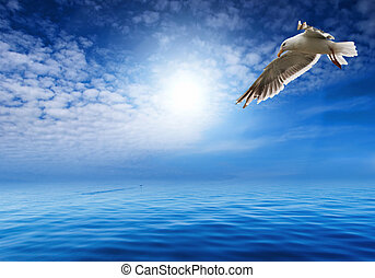 flaying seagull - Blue sky and flaying seagull
