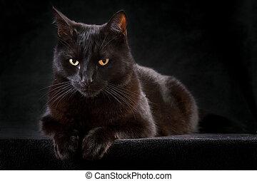 svart, katt