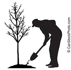 Planting a tree - Man is planting a tree Isolated white...
