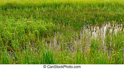 meadow - a water-meadow