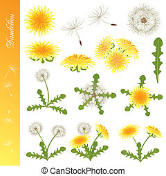 Dandelion Icons Set - Illustration vector