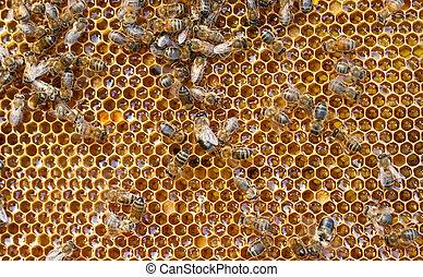 frais, miel, peigne, abeilles