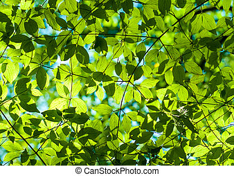 Fresh green leaves in the forest