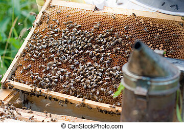 Old comb in opened hive and bees