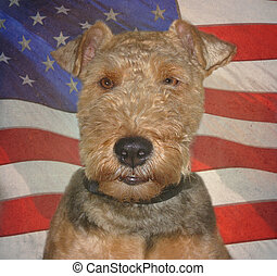 Patriotic Pooch - Welsh terrier with textured flag...