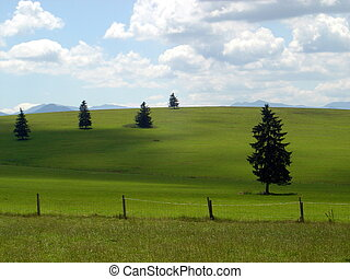 green meadows - sunny day on beautiful green meadows, a...
