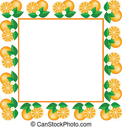 white frame of oranges - white square frame made of fruit...
