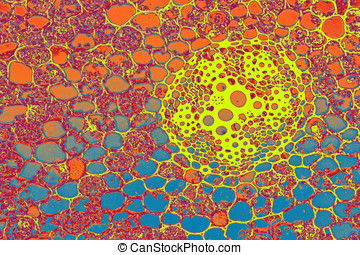 Stained Cells - Colorful Stained plant cells, Abstract...