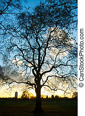 At the Hyde Park - Late afternoon at the Hyde Park in...