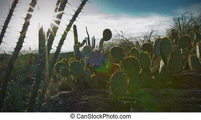 1250 Arizona Sonora Desert Sunset