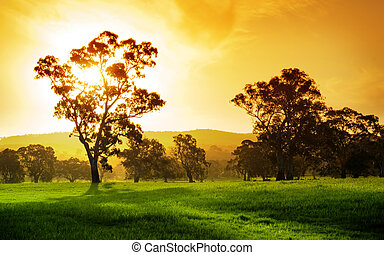 Sunset Field - Gorgeous rural field in South Australia
