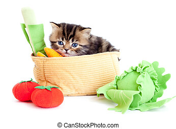 kitten pure breed striped british with toy vegetables...