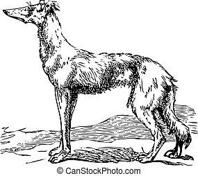 Saluki or Borzoi dog engraving - Old engraving of a Saluki...