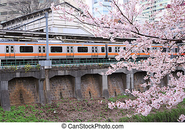 spring in Tokyo - blossom cherry branch over moving trains...
