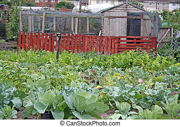 an allotment in growing season