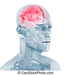 male brain - 3d rendered illustration of a male head with...