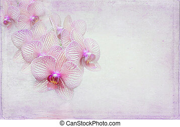 Soft Pink Orchids - Orchid blossom on pink textured...