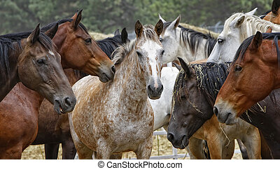 Horse Herd - Center of Attention - A horse is surrounded by...