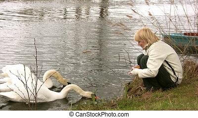 Feeding of pair swans