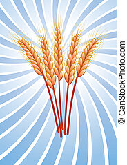 wheat ears - bunch of vector wheat ears on retro background