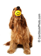 Smiley face dog - Cocker Spaniel with smiley face ball in...
