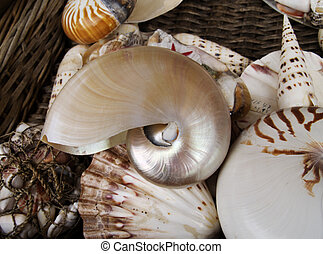 backet of shells - backet of sea shells