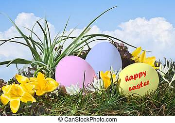 Easter eggs on grass field with blue sky background