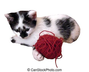 Cute kitten and yarn - Kitten and yarn isolated on white