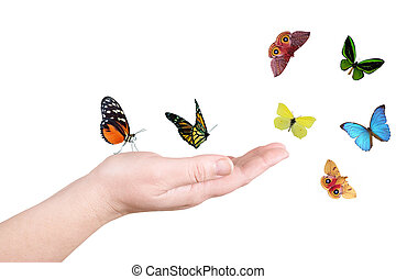 Hand and butterfly on a white background