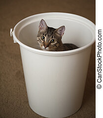 Kitten in a diaper pail - Cute Kitten peeks out of a diaper...
