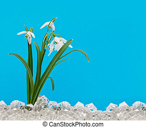 The first snowdrops in the ice on a blue background
