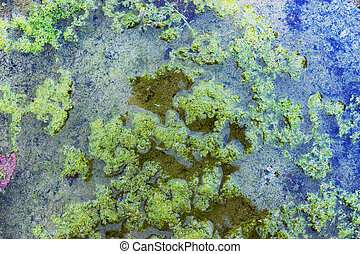 bog with duckweed, green texture, stagnant water, algae in...