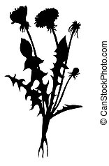 vector silhouette dandelion on white background