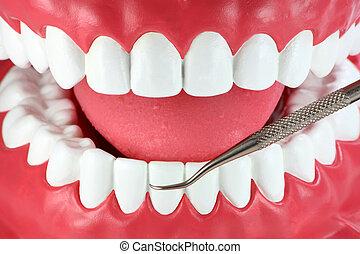 bocca, bianco, denti, dentale, cogliere, attrezzo