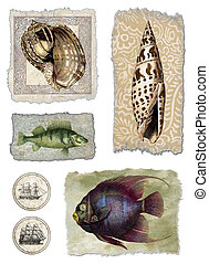 Shell & Fish Collage - Raster Illustration. Hand colored...