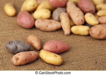 fingerling potato variety - a variety of small, elongated...
