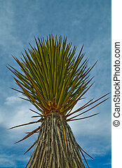 Yucca Plant - Yucca is a genus of perennial shrubs and trees...