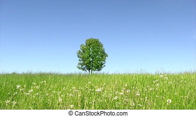 Solitary tree on green field