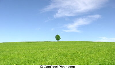 Solitary tree, summer landscape - Solitary tree on blue sky...